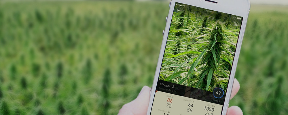 best apps for medical marijuana patients