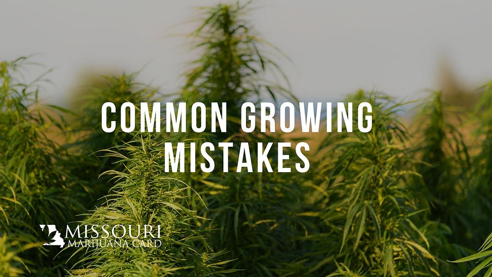 common marijuana growing mistakes