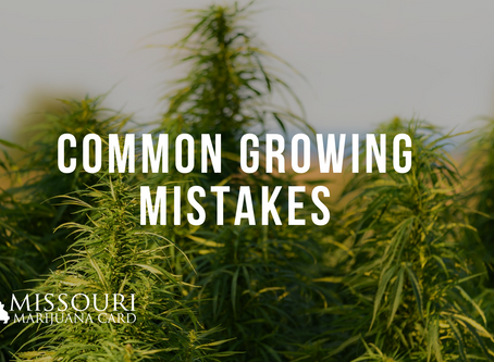 Four Common Marijuana Growing Mistakes