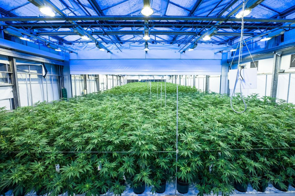 Sixth Cultivation License Awarded in Arkansas