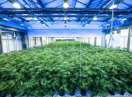 Arkansas Awards Sixth Medical Marijuana Cultivation License