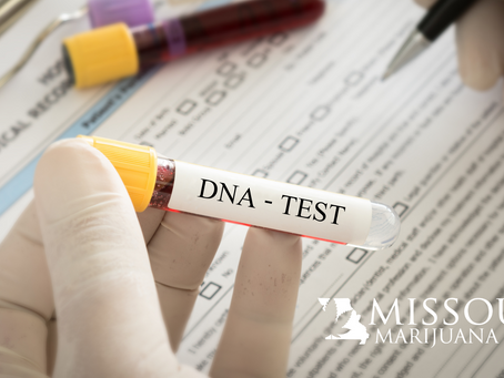 DNA Test Gives Personalized Marijuana Recommendations For You