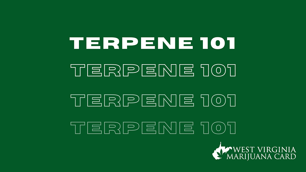 terpenes and their benefits