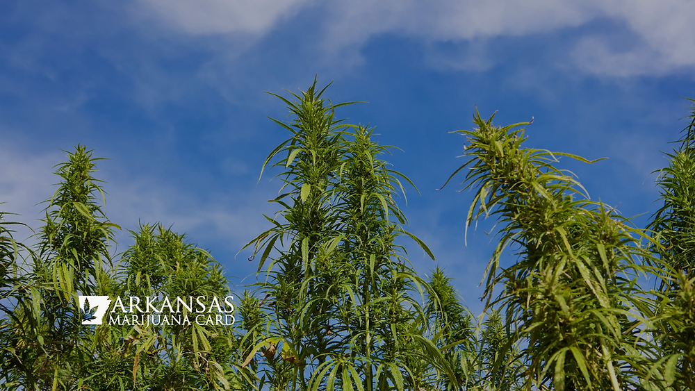how marijuana can help you this summer
