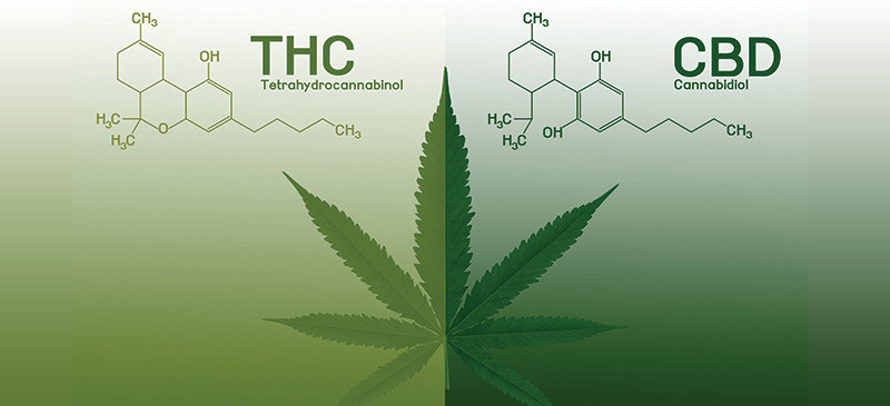 Entourage Effect Combining THC and CBD