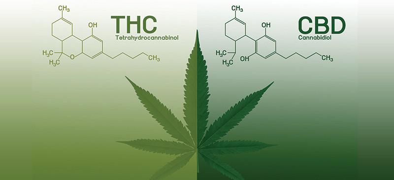 Entourage Effect Combining THC and CBD