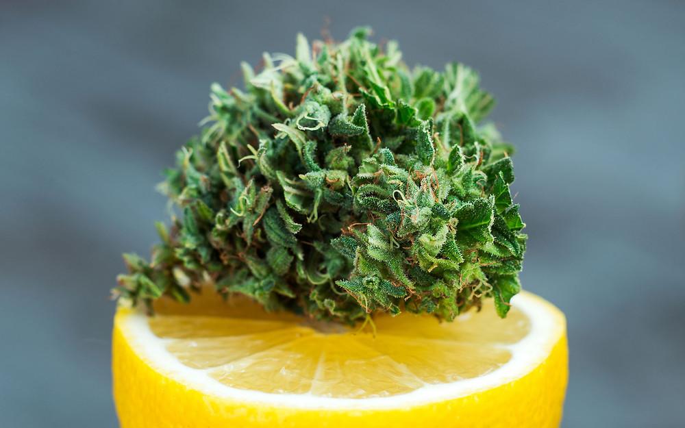 Limonene Marijuana Terpene