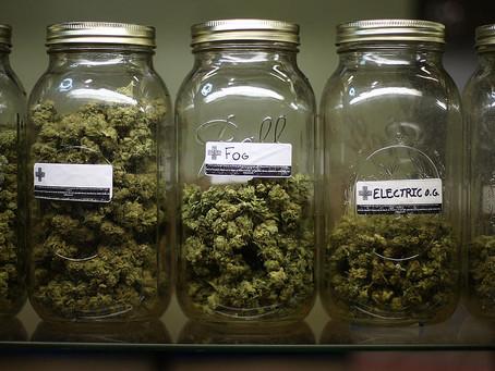 Can Marijuana Go Bad? Understanding the Shelf Life of Medical Marijuana