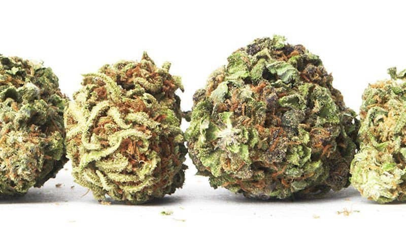Best marijuana strains for chronic pain