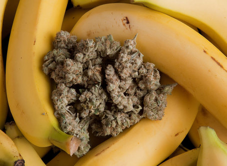 Cannabis Is More Than THC: The Other Phytonutrients in Weed