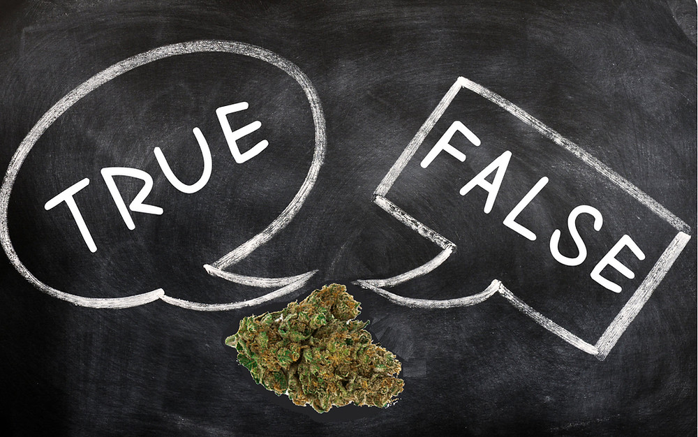 Cannabis true or false trivia questions