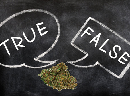 True or False? 10 Questions to Test Your Cannabis Knowledge