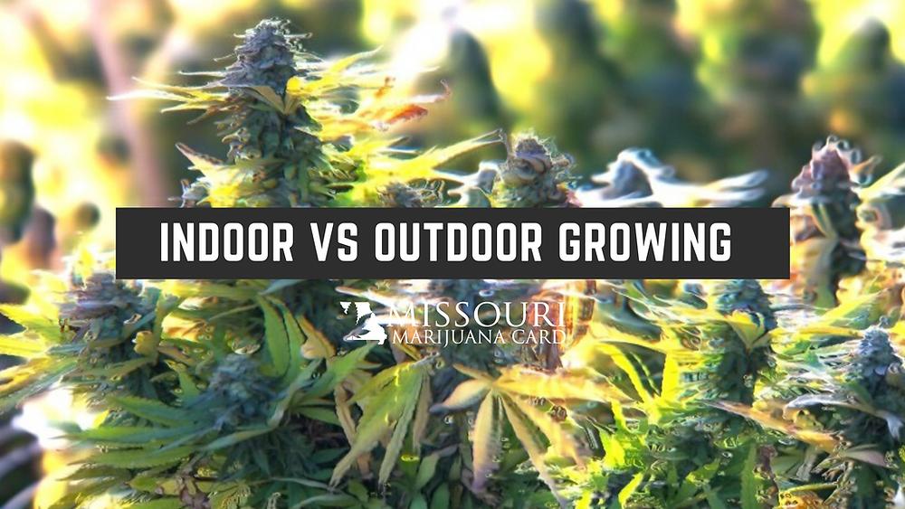 Is growing marijuana indoor or outdoor better