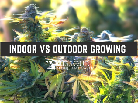 Indoors vs. Outdoors: Which is Best for Growing Cannabis?