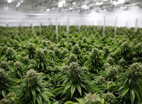 New Fort Smith Marijuana Cultivator Anticipated Opening