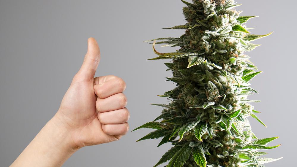 Medical Marijuana PAtients are happier and healthier