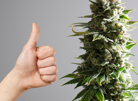 New Study Reveals Individuals Who Use Medical Cannabis Are Healthier & Happier Than Those Who Don't