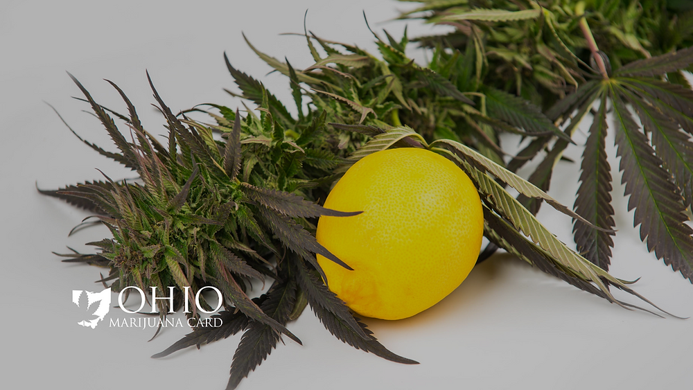Cannabis Terpenes and its benefits