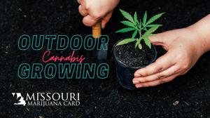Growing cannabis in Missouri