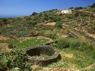 Le Bianco Maggiore et l'histoire de la tradition vinicole sicilienne