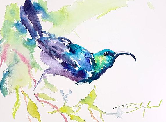 """""""Sunbird Green"""", Watercolour A3"""
