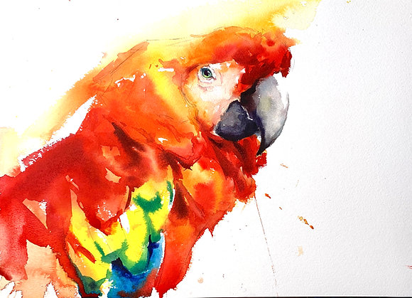 Zoom Course: Watercolour Birds - 4 sessions starting 15th September