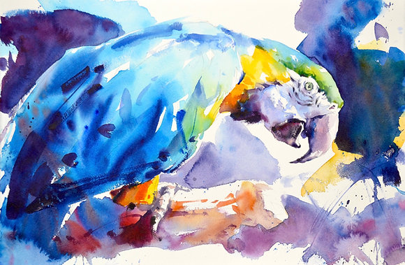 """Gold Blue Macaw"" watercolour (38x58cm) half sheet"