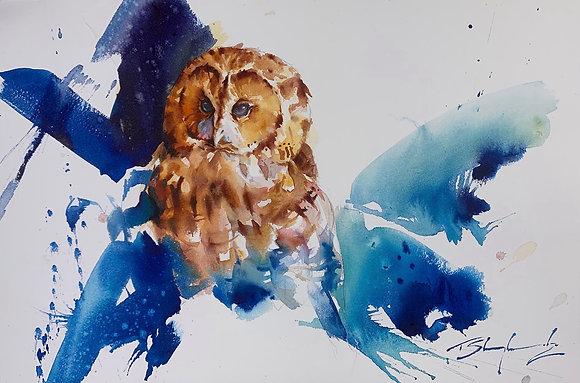 """""""Awake & Ready"""" - Tawny Owl (38x58cm)"""