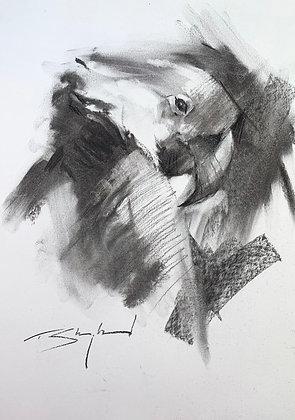 Hyacinth Macaw Charcoal A3 (30x42cm)