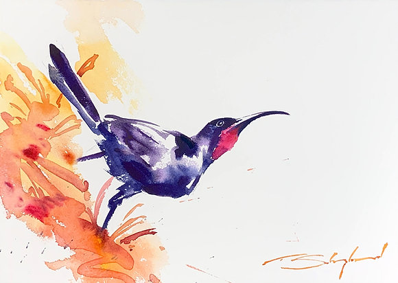 """Sunbird Black"", Watercolour A3"