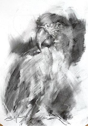 Blue Throated Macaw, Charcoal A3 (30x42cm)