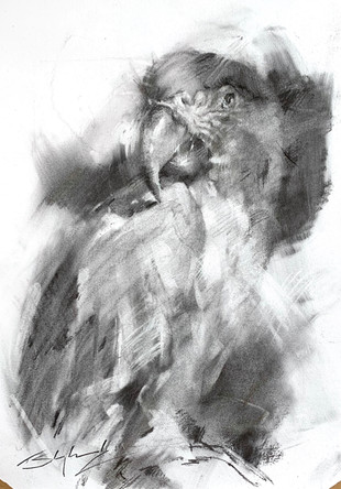 5.6.21 - Macaw Charcoal 2 websize.jpg