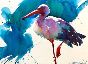 Sunlit Stork