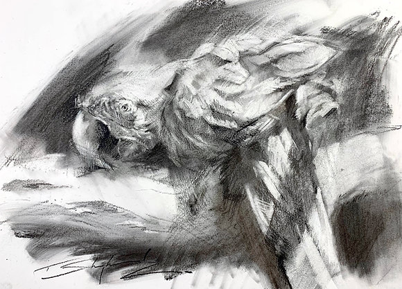 Green Wing Macaw, Charcoal A3 (30x42cm)