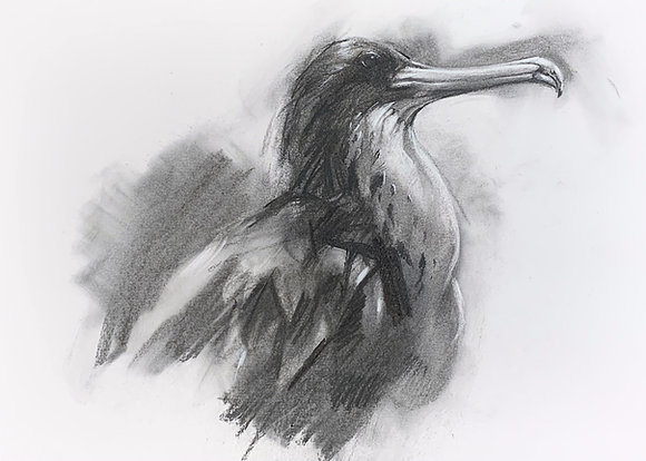 """""""Frigate"""" Charcoal on paper A3"""