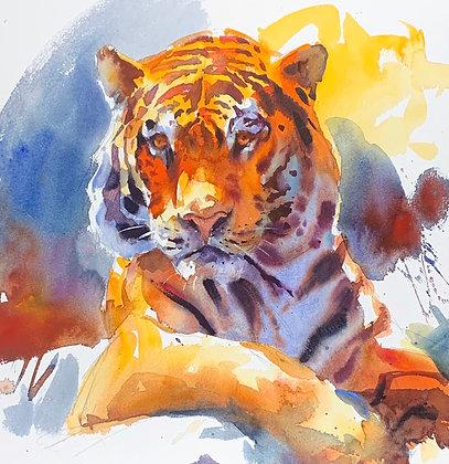 """Tiger"", Watercolour 39x39 cm"