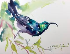 Sunbird - watercolour.jpg