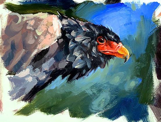 """""""Bateleur Eagle"""", Acrylic on paper , 26x32 cm"""