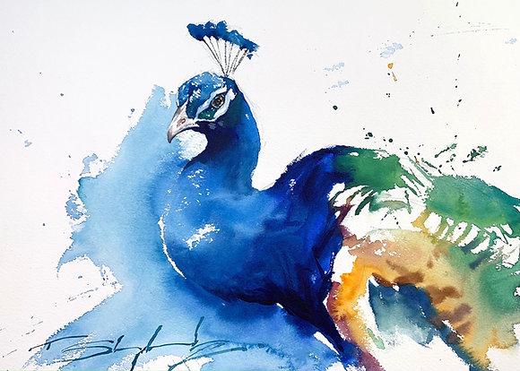 Peacock Watercolour A3 (30x42cm)