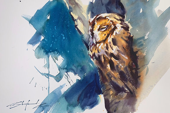 """""""Before the Rise"""" - Tawny Owl (38x58cm)"""