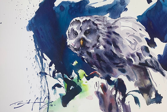 """Before of After?"" - Barred Owl (38x58cm)"
