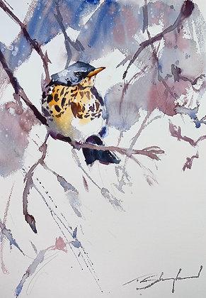 Lone Fieldfare Watercolour A3 (30x42cm)