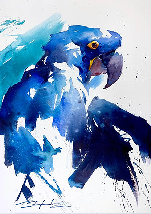 """""""A Touch of Warmth"""" - Hyacinth Macaw (38x58cm)"""