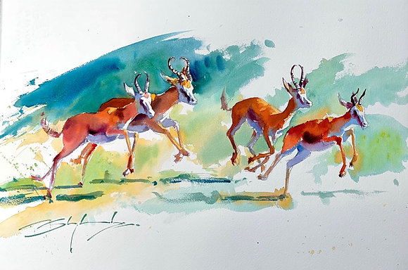 """""""Leaping Sprinboks"""" watercolour Demo (38x58cm)"""