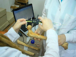 Osteology Research Workshop