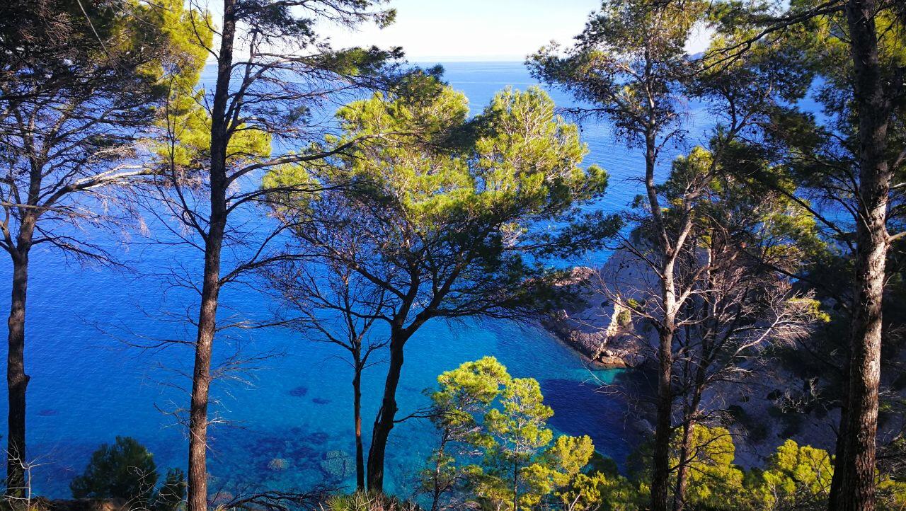 GR221_Trans-Mallorca_Bäume_und_Meer_(c)_Die_Laufschrittmacher_Christian_Reichart