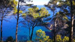 GR221 Trans-Mallorca - Bäume