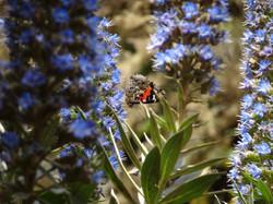 GR132 Aroud&across La Gomera_Botanik