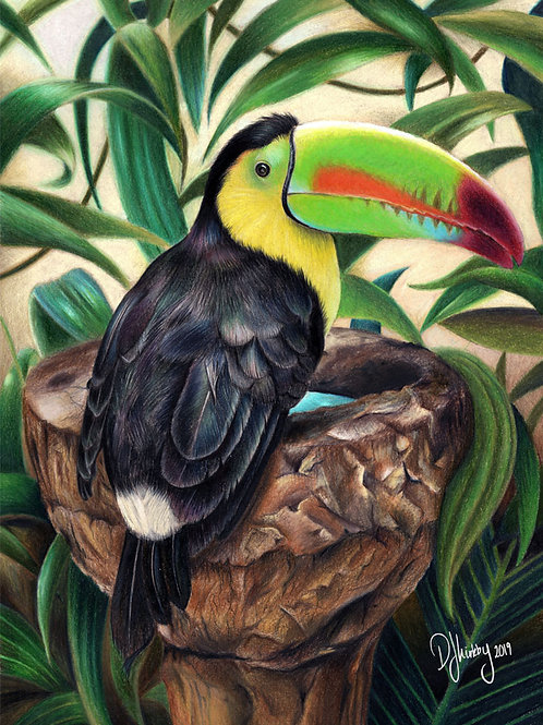 Sam the Toucan Print