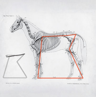 perch_applied research_hest_design_human